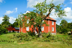 苹果切断的结构树 免版税图库摄影