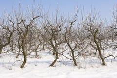 苹果包括果树园雪 库存照片