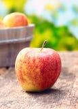 苹果可口红色黄色 免版税库存照片