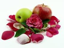 苹果叶子玫瑰 库存图片