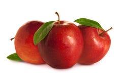 苹果叶子红色三 库存图片
