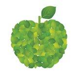 苹果叶子 免版税图库摄影