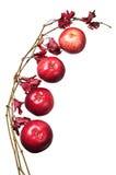 苹果和与秋叶的一个分行 免版税库存图片