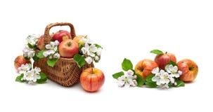 苹果和苹果树在白色背景的一个篮子开花 免版税库存图片