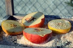 苹果和面包屑 免版税库存照片