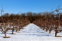 苹果园冬天 库存图片