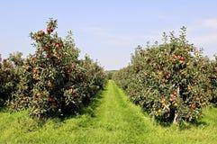 苹果园红色 免版税库存照片