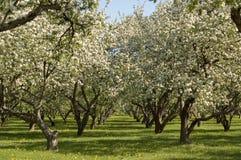 苹果园 库存照片