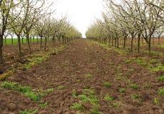 苹果园 图库摄影