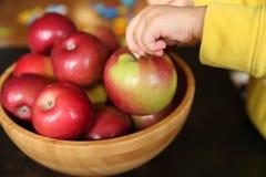 苹果在一个孩子的手上从一个木竹碗的用苹果 图库摄影