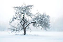 苹果在冬天之下的雪结构树 库存照片