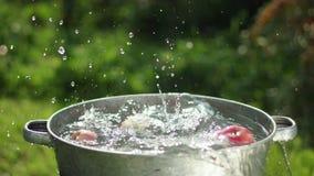 苹果在水中 苹果在水水池被洗涤  影视素材