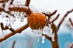 苹果在冻雨中  免版税库存图片