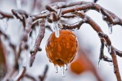 苹果在冻雨中-  免版税库存图片