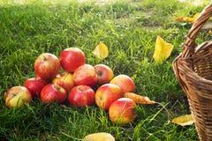 苹果堆红色 免版税库存图片