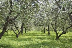苹果庭院 库存照片