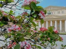 苹果开花的春天结构树 免版税库存照片