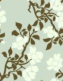 苹果开花的树 免版税库存照片