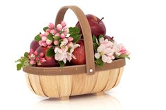 苹果开花花 图库摄影