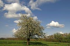 苹果德国春天结构树 免版税库存照片