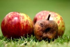 苹果批腐烂的掠夺物全部的意志 库存图片