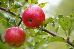 苹果拖曳 免版税库存图片