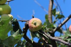 苹果收获结构树的夜间庭院 免版税库存照片