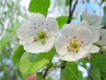 苹果收获结构树的夜间庭院 免版税库存图片