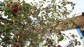 苹果收获结构树的夜间庭院 影视素材