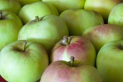 苹果收获 免版税库存图片