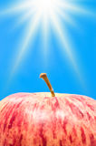 苹果星期日 图库摄影