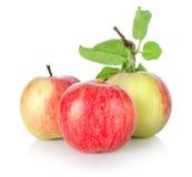 苹果查出成熟三 免版税库存照片