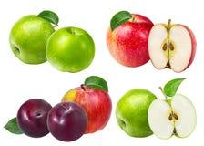 苹果查出空白的李子 图库摄影