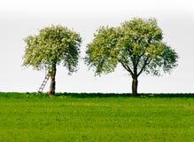 苹果树二 库存照片