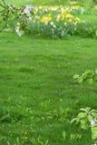 苹果树分支在绿色被弄脏的背景开花 免版税库存图片