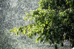苹果树分支在雨中 免版税库存照片