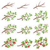 苹果树分支 库存图片