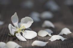 苹果树和瓣从在一张木桌s上的风滴下了 免版税库存图片
