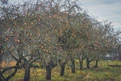 苹果树和雾 季节性背景 库存图片