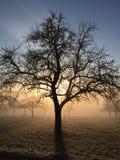 苹果树在冬天 库存图片