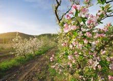 苹果树在庭院里 图库摄影