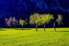 苹果树在秋天,山在背景中 库存照片