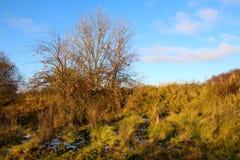 苹果树在11月 库存照片