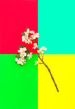 苹果树开花五颜六色的背景春天花 免版税库存照片