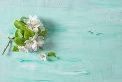 苹果树开花春天开花绿松石背景 免版税库存照片