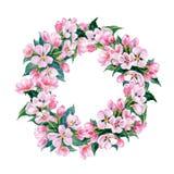苹果树开花的分支花圈  水彩传染媒介 免版税图库摄影