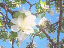 苹果树开花 向量例证