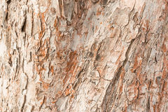 苹果树的厚实的吠声的概略的纹理,在形成木细胞许多镇压的表面  库存照片