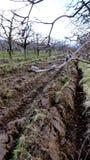 苹果树的新被耕的领域 免版税库存照片