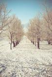 在一个冬日的苹果树 免版税图库摄影